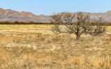 A single tree on the grasslands of Buenos Aires NWR
