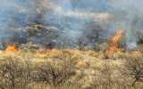 Fire leaps from grass to plant in Buenos Aires NWR