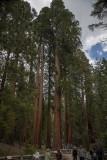 Mariposa Grove-14-2.jpg