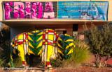 Multicolored Buffalo