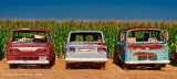 Three Old Vans and a Cornfield