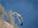 Segull n Flight at the end of the day
