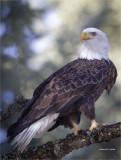 Eagle, Lincoln, Co.