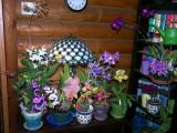 recent_bloomings