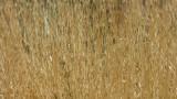 Zanjero Park : Grass seeds