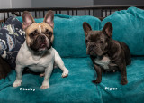 my_dogs