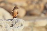 BIRDS IN SAN DIEGO COUNTY