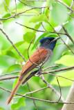 Birdwatching (MArk) - 观鸟台