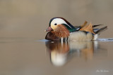 canards__bernaches__ducks_geese