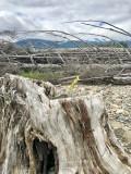 June 5-9, 2019 --- Kitimat River, British Columbia