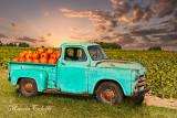 1950 DODGE TRUCK SUNSET AT SUNFLOWER FIELD-4619.jpg