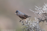 Moroccan wildlife