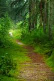 Dronley Woods
