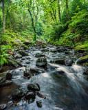 Queen's Forest, Aberfoyle