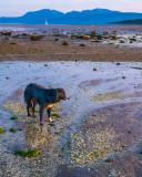 Friendly dog, St Ninian's Bay, Bute