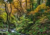 Queen Elizabeth Forest, Aberfoyle