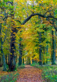 Templeton Woods