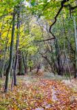Baldovan Woods
