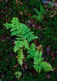Backmuir Woods