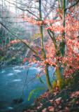 Trottick Ponds