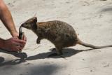 Australia Cruise - Fremantle/Perth (Rottnest Isl), Albany Dec. 2019