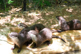 At the zoo, we saw small-clawed otters