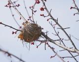 Last Season's Nest