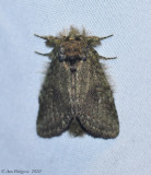 Moth with Fungus