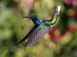 THE BIRDS OF TRINIDAD and TOBAGO 2019