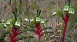 West Australian Flora