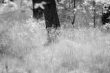 forest_ir_2020