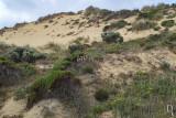 Parque Natural da Costa Vicentina