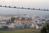 Pássaros do Sul