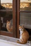 Os Gatos de Aljezur