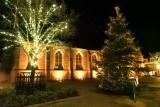 Leerdamse wensboom in het licht