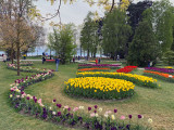 Switzerland - Tip-toe....thru the Tulips..at Morges!