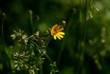 Windswept Weeds