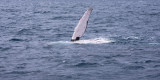 whales_of_hervey_bay_and_moreton_bay