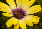 2019_flowers_insects_and_wild_things