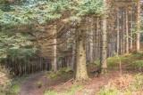 Fir Forest, Kindlestown Wood, Ballydonah, Wicklow, Ireland