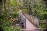 Walking Bridge, Pedestrian Bridge, Knocksink Wood, Enniskerry Ireland