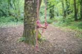 Swing, Knocksink Woods, Eniskerry, Ireland