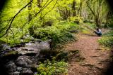 Knocksink Woods Dargle River, Enniskerry, Ireland