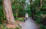 Powerscourt Woods, Wicklow, Ireland