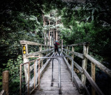 Wooden Walking Bridge, Lackandarragh, Ireland