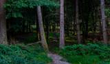 Knockree Woods, Ireland