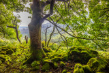 Woods, Glencree, County Wicklow, Ireland