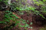 Wood, Glencree, County Wicklow, Ireland