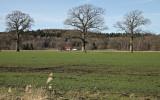 Tågra, ett område där gamla och stora ekar står kvar mitt i åkern. Så såg det ut för länge, längesedan