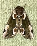 Papillons-beautés et papillons-pestes